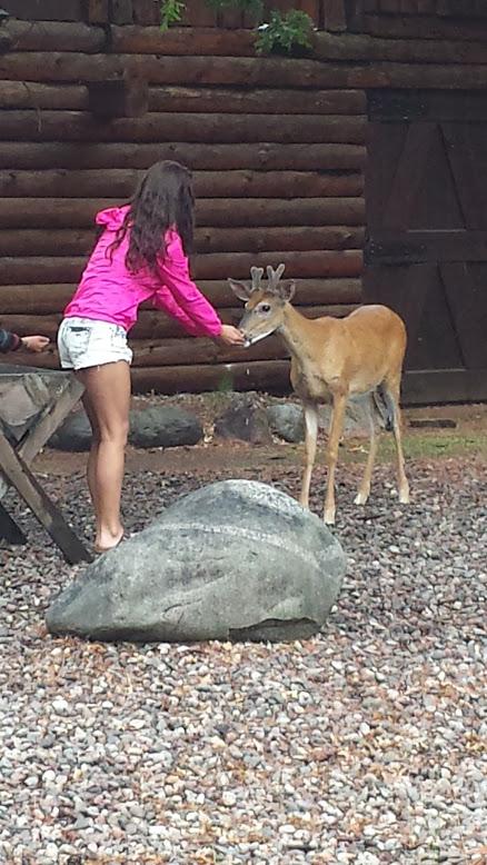 deerfeeding